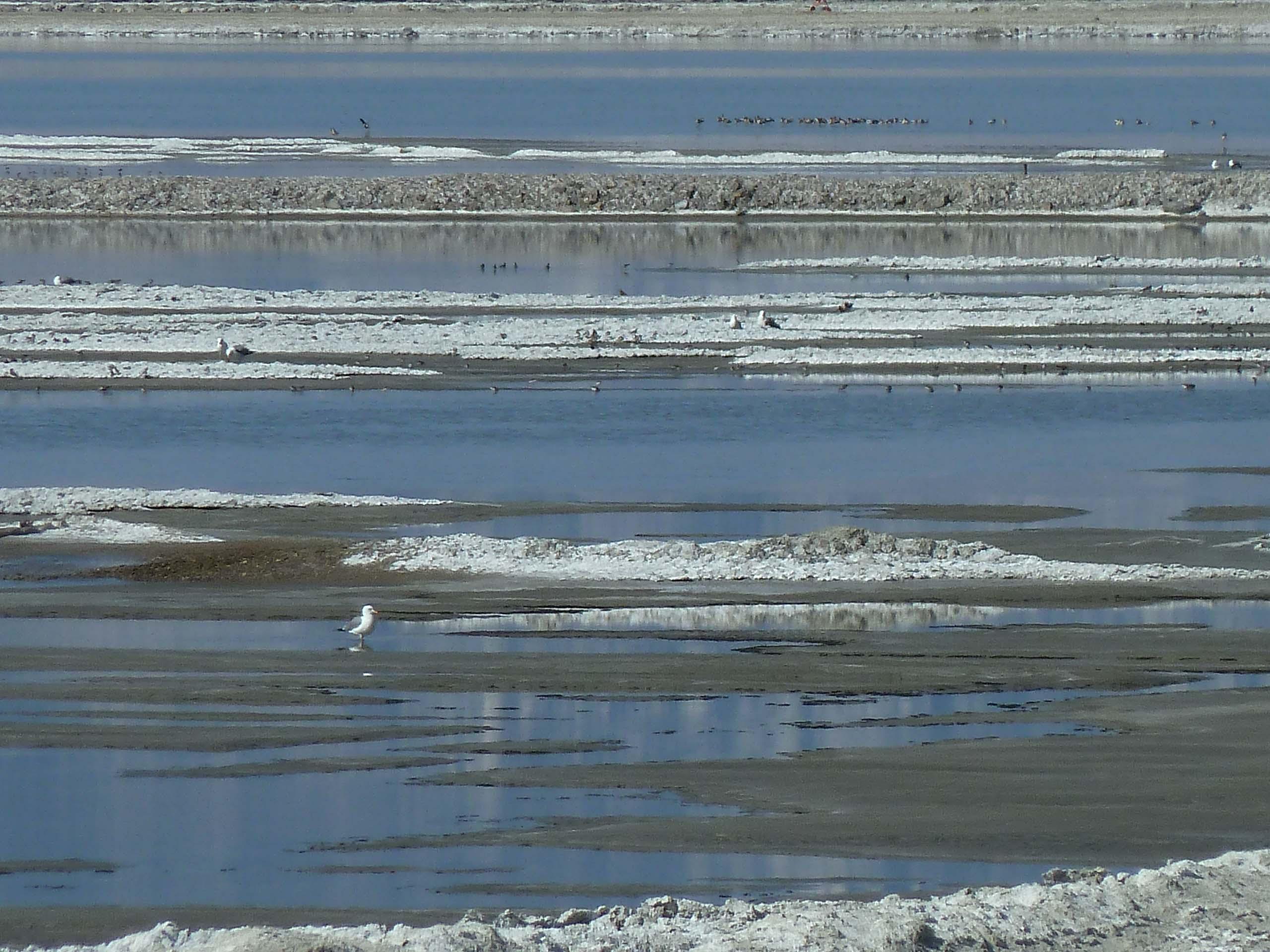 Owens Lake Big Day 2014 Image 3
